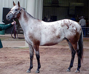 Libby showing Broodmares in October, 2004
